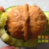 泰安果树苗批发市场