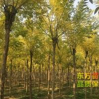 泰安绿化苗种植基地