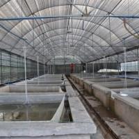 养殖温室 养殖大棚