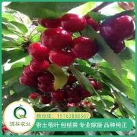 大樱桃品种
