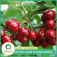 砂蜜豆樱桃